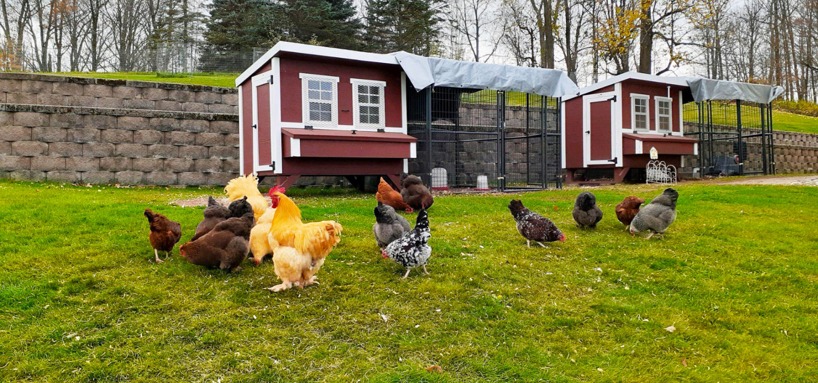 chicken coop for sale south carolina