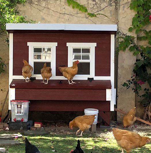 chicken coops south carolina
