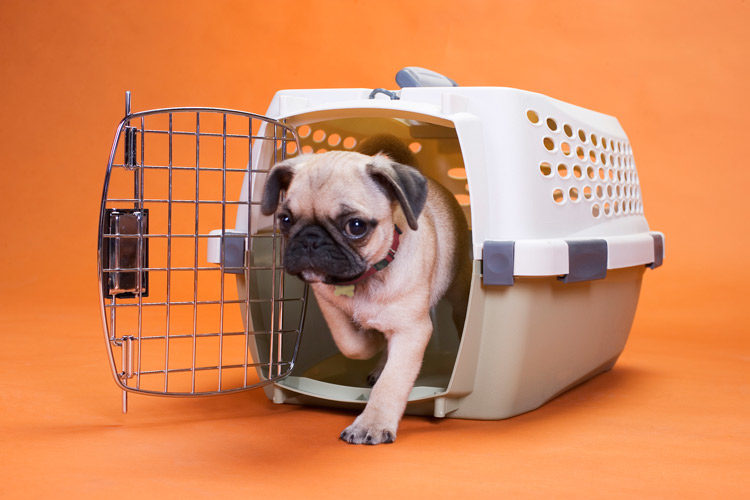 difference between dog kennel and dog crate